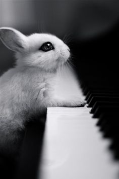 Sing us a song!, your the piano bunny.....