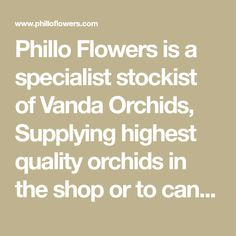 Phillo Flowers is a specialist stockist of Vanda Orchids, Supplying highest quality orchids in the shop or to can buy online. Phalaenopsis Orchids specilialist