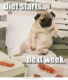 The Pug Anthem: Diet Starts Next Week while sitting on a beach chair eating pizza. LOL Gotta love it! Pug Eustaquio Sult this looks like LuLu :) Funny Dogs, Funny Animals, Cute Animals, Animal Fun, Funniest Animals, Animals Dog, Raza Pug, Cute Pugs, Pug Love