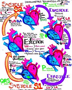 encourage revisited cardiac drawing highly havent could cycle made your once this see the yet cycle revisited If you havent made your own drawing of this yet I highly highly encourage itYou can find Cardiac cycle and more on our website Cardiac Nursing, Nursing Career, Cardiac Cycle, Nursing School Notes, Nursing Schools, Critical Care Nursing, Respiratory Therapy, Nursing Programs, Nurse Life