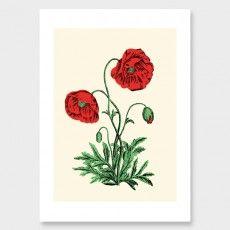 Vintage Poppies Art Print by Adrian Bird