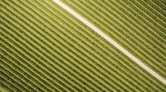 A pear orchard in Deil, Holland. It almost looks like it's made with a gradient tool in Photoshop. The picture was taken with an drone. The drone's perspective makes you realise how organised our civilisation is, like it's drawn in a sketchbook.