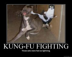 funny dog pics with captions | Thread: Funny Dog vs Cat pic - needs a caption