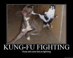 funny dog pics with captions | Thread: Funny Dog vs Cat pic - needs a caption