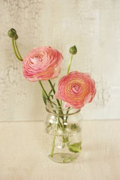 Ranunculus YESS!!