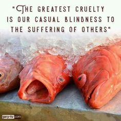 Are you for or against animal cruelty? People who believe at heart that it is wrong to harm animals for personal pleasure or profit are already professing vegan beliefs. Their next logical step is to align their core values with their everyday actions and lifestyle by being vegan. www.vegankit.com & www.freefromharm.org & www.howtogovegan.org