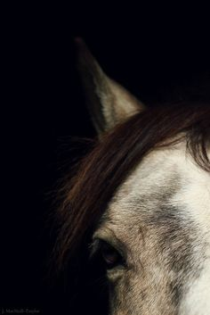 The Buckskin Pony - Gypsy Mare Studios All The Pretty Horses, Beautiful Horses, Animals Beautiful, Cute Animals, Horse Caballo, Mundo Animal, Horse Photography, Horse Love, Wild Horses