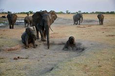 We've already had the first rainfall of the season in our concessions, but October is still delivering the that a dry season safari is renowned for. Repeat guest Jannie Jacobs shares his quintessential October showcase. Zimbabwe, Best Games, Wilderness, Repeat, Safari, National Parks, Elephant, Drama, October