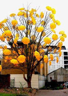 comment a yellow emoji ✨ Umbrella Tree, Yellow Umbrella, Under My Umbrella, Umbrella Photography, Yellow Photography, Van Gogh, Mellow Yellow, Color Yellow, Mustard Yellow