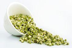 Soja vert/ Green gram  http://aquestforknowledge.over-blog.com/article-soja-vert-green-gram-124619960.html