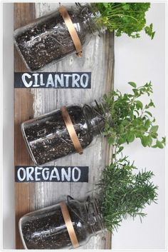 Wall mounted mason jar herb containers. Colorado Backyard Urban Gardening & Farming. http://www.EdwardsYards.com