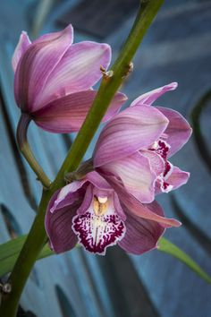 JOSHUA TAYLOR PHOTOGRAPHY | orchid