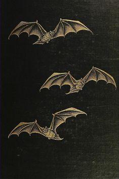 Gothic Aesthetic, Aesthetic Art, Arte Horror, Horror Art, Victorian Vampire, Dracula, My Chemical Romance, Dark Art, Aesthetic Wallpapers