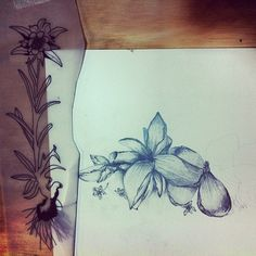 #flower #illustration #drawing #ink #pencil