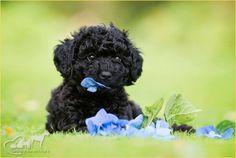 BLOG OBRAZKI: PIESKI Dogs, Animals, Boyfriends, Dog, Animales, Animaux, Pet Dogs, Doggies, Animal