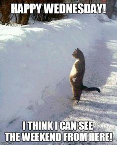 happy wednesday funny | HAPPY WEDNESDAY! I THINK I CAN SEE THE WEEKEND FROM HERE! | Generated ...