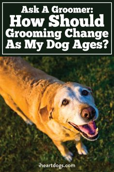 How to groom your growing dog!