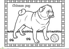 Worksheets: Pug Coloring Page