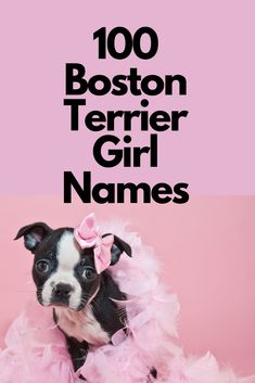Bella contemplating everything. If you are reading this chances are you are either contemplating buying or have bought a Boston Terrier. Boston Terrier Cake, Red Boston Terriers, Boston Terrior, Girl Dog Names, Female Dog Names, Puppy Names, Cuddles And Snuggles, Pugs, Terrier Puppies