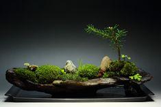 裏ワザ12 癒しの苔盆栽 里山の風景の写真(画像) 写真ID:2510371- 写真共有サイト:PHOTOHITO
