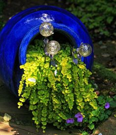 simply stunning use of creeping jenny in a cobalt pot with decorative orbs