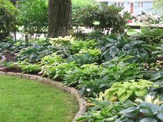 Love all the hostas! Height variation from mounding the earth.