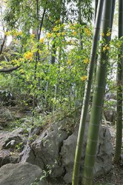 photo gallery 冨士大石寺顕正会 公式サイト 庭園