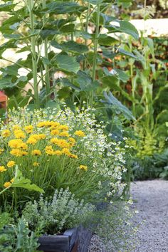 Plant to Attract Pollinators to Your Yard....