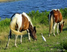 A bird and his horse friends