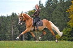 Equestrian: Dressage ~ love those halflingers