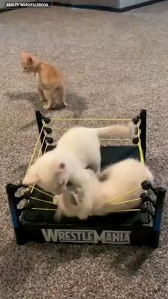 Funny Cute Cats, Cute Baby Cats, Cute Little Animals, Cute Cats And Kittens, Cute Funny Animals, Kittens Cutest, Funny Animal Memes, Funny Cat Videos, Funny Animal Pictures
