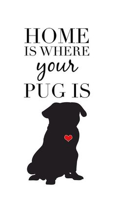 """""""Home is where your pug is"""""""
