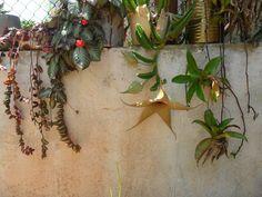 cactus flores fotos - Buscar con Google