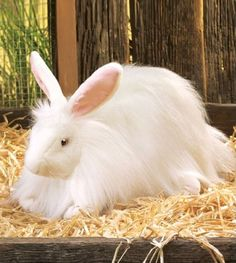 Folkmanis Puppet Angora Rabbit $16.99