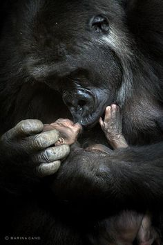 Okay, so they're technically not 4-legged, but this is too gorgeous not to pin. Gorilla Love by Marina Cano