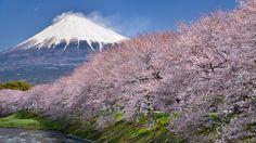 fuji #japan #shizuoka