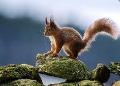 Squirrel on the rock Desktop wallpapers 1920x1200 Wallpaper, Tier Fotos, The Rock, Wallpaper Backgrounds, Desktop Wallpapers, Background Images, Mammals, Squirrel, Wildlife