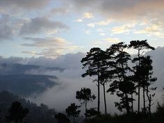 10 of the Best places to go in the Philippines (Baguio, Philippines) Baguio Philippines, Visit Philippines, Philippines Culture, Philippines Travel, Places Around The World, Oh The Places You'll Go, Around The Worlds, Beautiful Places To Visit, Cool Places To Visit