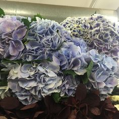 Another trip to the NY Flower Market.... - The Enchanted Home