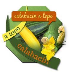 Recetas con Calabacín Zucchini Recipes Recettes à la Courgette