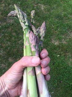 Celery, Gardening Tips, Asparagus, Seeds, Exterior, Fruit, Vegetables, Flowers, Plants
