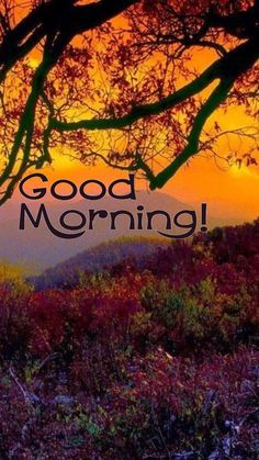Good Morning Meme, Good Morning Friday, Good Morning Photos, Good Morning Greetings, Good Morning Wishes, Morning Quotes, Valley Of Flowers, Its Friday Quotes, English Language