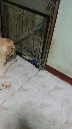 Little cobra!!
