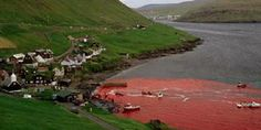 Tell Royal Caribbean to Take Faroe Islands off Their Route! #‎SeaShepherd‬ ‪#‎OpGrindini #StandUp250 ‬‬‬‬‬‬‬‬‬‬ #defendconserveprotect http://www.thepetitionsite.com/es-es/335/544/974/tell-royal-caribbean-to-take-faroe-islands-off-their-route/?taf_id=14351690&cid=fb_na