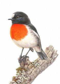 Scarlet Robin