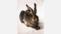 "A good example is Albrecht Dürer's ""Young Hare"", 1502.  ""...but it's not often on show. After a maximum of three months, Young Hare needs five years in dark storage with a humidity level of less than 50% for the paper to adequately rest. It was on view briefly in 2014 after a break of ten years, and will appear  again for a short time in 2018."" Other images are shown.  #rare #art"