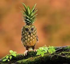 pineowl