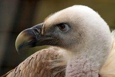 His Madam Bald Eagle, Bird, Animals, Animales, Animaux, Birds, Animal, Animais