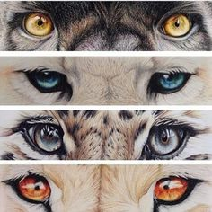 Look my eyes and see my soul -art by Animal Sketches, Animal Drawings, Art Drawings, Beautiful Cats, Animals Beautiful, Animals For Kids, Cute Animals, Classe D'art, Colorful Snakes