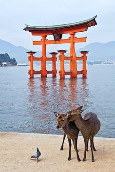 Itsukushima Shrine/Japan by funtor84